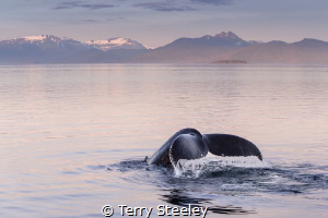 'Enchanting fluke' A wonderful evening shared with many ... by Terry Steeley