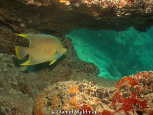 Blue Angel in a Cave Isla Mujeres  Mexico. Canon G15 with... by Daniel Waldman