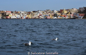 Marine of corricella by Salvatore Ianniello