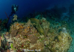 just a eel  cursing past by Simon Dyer