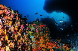 ~ The Gauntlet ~ I simply love dive sites with interesti... by Geo Cloete