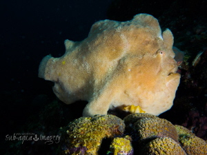 """King of the Castle""