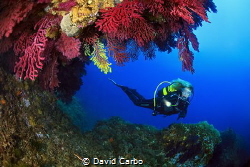 Diving between big gorgonians of Medees islands by David Carbo