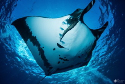 Giant Manta at The Boiler, San Benedicto Island, taken wi... by Eric Addicott