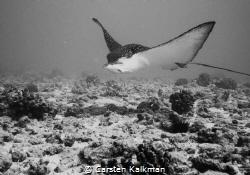 My new friend.. Maunalua Bay, Oahu Hawaii by Carsten Kalkman