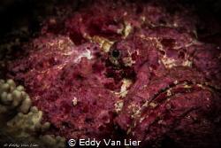 """""""La vie en rose"""" by Eddy Van Lier"""