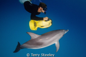 'Fun in the sea',  Dolphin, Bahamas — Subal underwater... by Terry Steeley