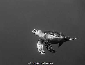 Keep Swimming by Robin Bateman