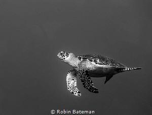 Keep Swimming by Robin Bateman