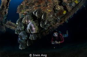 K E E P . C A L M Orbicular batfish (Platax orbicularis)... by Irwin Ang