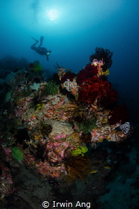 A L I V E Coral reef & Diver Puerto Galera, Philippines... by Irwin Ang