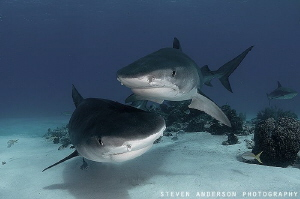 Doest get better than to be visited by two lovely ladies!... by Steven Anderson