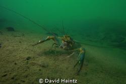 Lake Eacham shot at 18m using Canon 7D, 10-22mm lens. by David Haintz