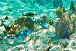 Palancar Reef, Cozumel by Alison Ranheim