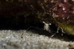 Shrimp by Takma Lherminier
