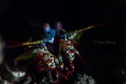 Mantis Shrimp by Taco Cheung