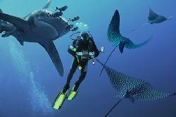 nik D2x - COMPOSING> batfish/turtle by Manfred Bail