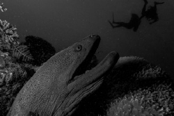 Rescue that diver! Moray eel and divers - Mayotte  Pic... by Takma Lherminier
