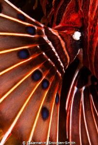 Abstract Similan Islands by Susannah H. Snowden-Smith