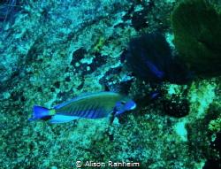 Electric Fish! by Alison Ranheim