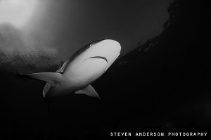 The day ends with Reef Sharks above, around us. Tiger Bea... by Steven Anderson