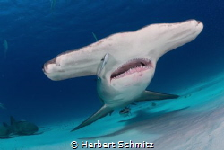 Love the Bimini hammers by Herbert Schmitz