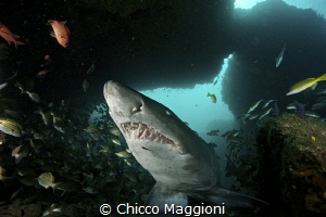 smiling raggie in the Cathedral @Aliwal Shoal by Chicco Maggioni