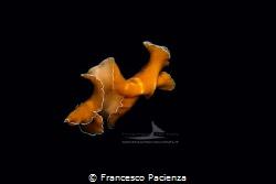 [:b:]Like an amgel[:/b:] by Francesco Pacienza