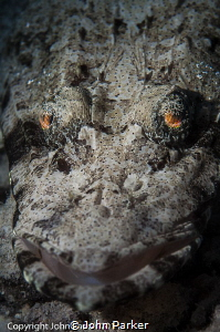 Crocodile eyes! by John Parker