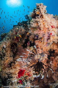 Colourful Reef by John Parker