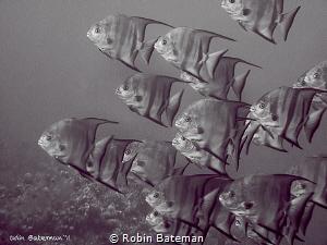 School's in Session - by Robin Bateman