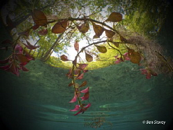 Easter!  Shot at Ginnie Springs, Florida over Easter week... by Ben Storey