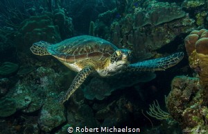 At Karpata, Bonaire by Robert Michaelson