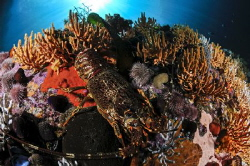 ~ Just a Rock Lobster ~ Beauty might be in the eye of th... by Geo Cloete