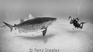 'Taking care of business.' — Subal underwater housing, ... by Terry Steeley
