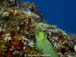 Beautiful eel in Cozumel, Mexico. by Jennifer Cheatham