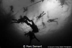 Sometimes at the end of a dive you just have to look up! ... by Marc Damant