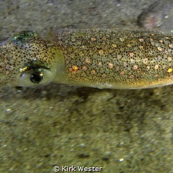 Look into a squids eyes. by Kirk Wester