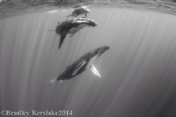 Family fun time...... nikon d7100 nauticam housing.Tokina... by Bradley Kerslake