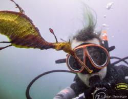 Seadragon Selfie by Sean Steininger