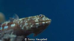 Lizzard fish by Jonny Haugstad