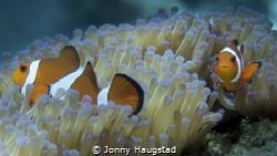 """""""Nemo"""" by Jonny Haugstad"""
