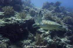 Taken just off Balacasag Island Bohol, not far from Alona... by Jonny Haugstad