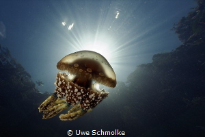 natural marine torch by Uwe Schmolke