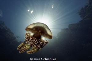 natural marine torch by Uwe Schmolke