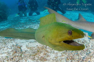 Curious Green, San Pedro Belize!!! by Alejandro Topete