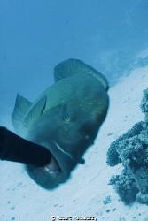 Better don't take boiled eggs underwater by Robert Malolepszy