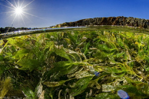 seagrass tide pool (Vivonne bay, Kangaroo island, south a... by Mathieu Foulquié