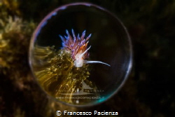 [:b:]Emisphere[:/b:] No Photoshop manipulation. by Francesco Pacienza