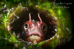 litle blenny in Home, el Jardin Acapulco by Alejandro Topete